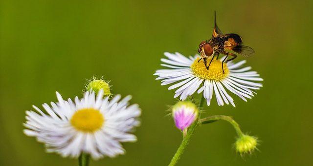 ¿Sabías que la miel ayuda a combatir la resaca?¿Y el polen es excelente para la próstata?
